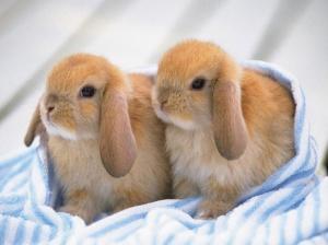 46459-bunnies-2-cute-bunnies